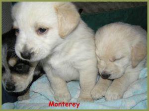 Monterey-11