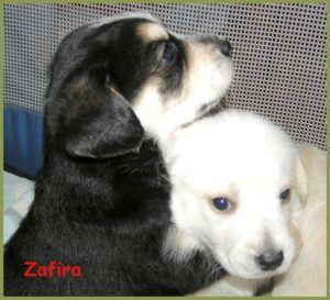 Zafira-11