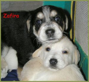 Zafira-12