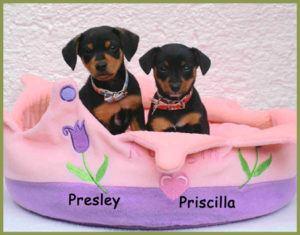 Presley-und-Priscilla-1