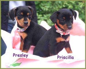 Presley-und-Priscilla-2