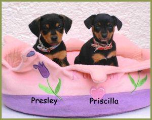 Presley-und-Priscilla-4