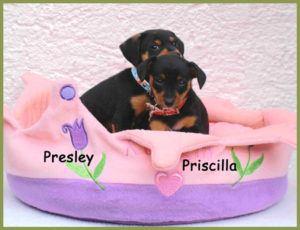 Presley-und-Priscilla-5