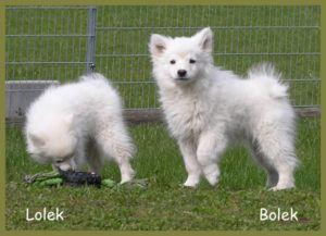 Bolek-16