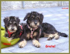 Gretel-10