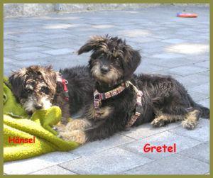 Gretel-12