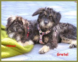 Gretel-4
