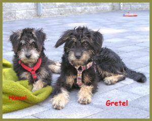 Gretel-7