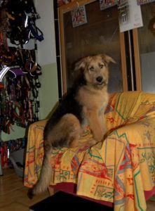 2014-11-1417-Hundetreiben-14