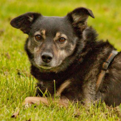 Patenhund * Kandra