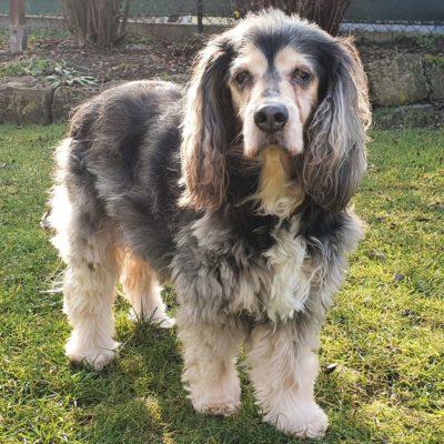 Patenhund * Sushy