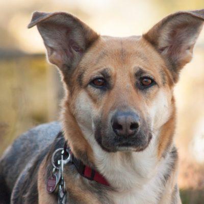 Patenhund * Ira