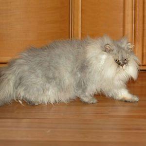 Kleines-baerchen-katze