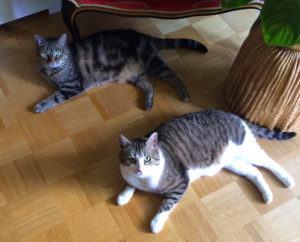 Mimi und Bandit 2
