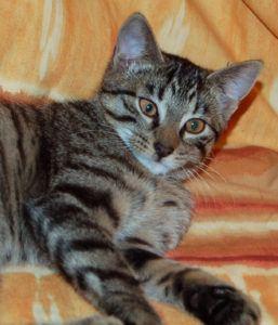 Trixi (13)