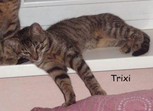 Trixi1