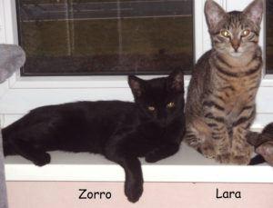 Zorro, Lara_1