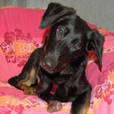 Patenhund * Nicolausi