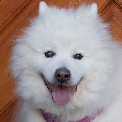 Patenhund * Puppy Love