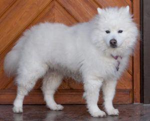 Puppy-Love-10