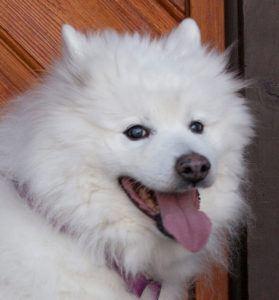 Puppy-Love-12