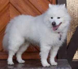 Puppy-Love-13