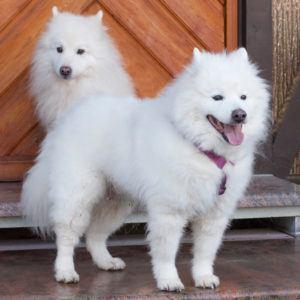 Puppy-Love-16-und-Roxy-Love-(hinten)