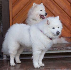 Puppy-Love-17-und-Roxy-Love-(hinten)