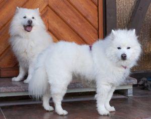 Puppy-Love-18-und-Roxy-Love-(hinten)
