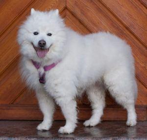 Puppy-Love-3