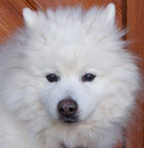 Puppy-Love-4