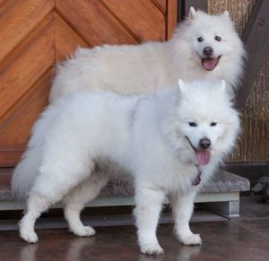 Roxy-Love-15-und-Puppy-Love-(vorne)