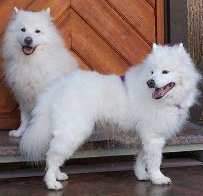 Wir brauchen dringend für Puppy Love Windeln in L oder XL. Gerne auch per Post.