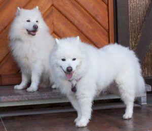 Roxy-Love-17-und-Puppy-Love-(vorne)