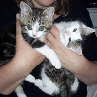 Frieda und Freddie