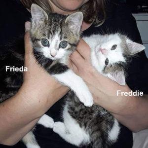 Frieda-und-Freddie-1-mit Namen-Startfoto
