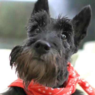 Patenhund * Little Nero