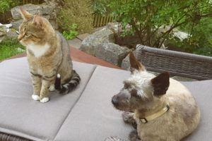 Dalia-mit-Katze