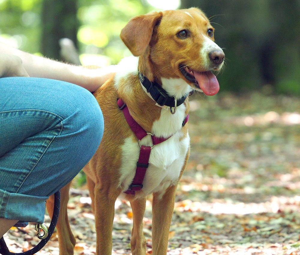 Mamita von der Tierhilfe Franken