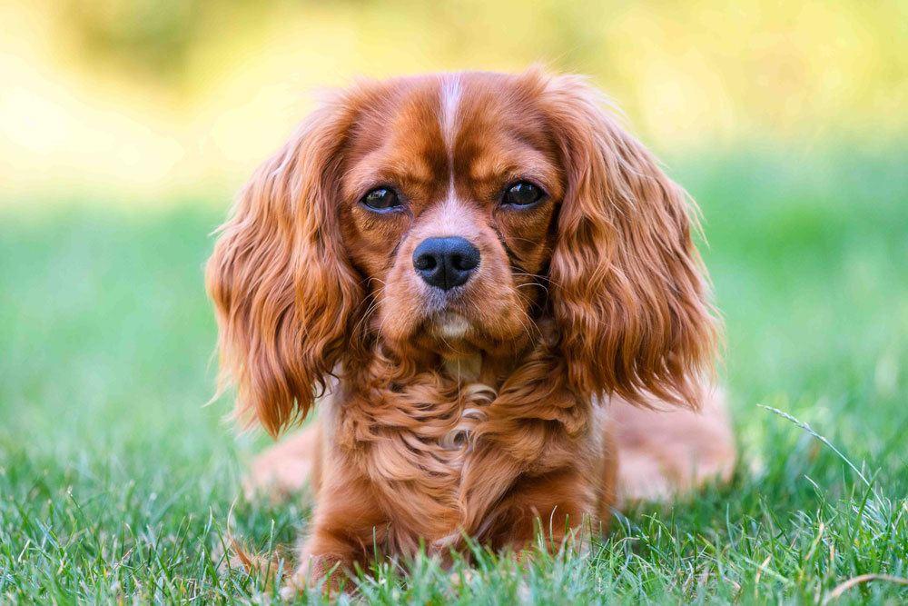 Tierhilfe Franken e.V. Hund Marlon