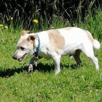 Lucky Jack (17 Jahre!) am Gardasee