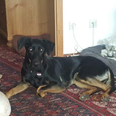 Sirius von der Tierhilfe Franken