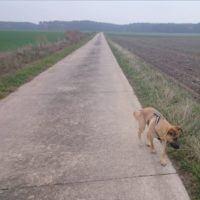 Skyline liebt lange Spaziergänge