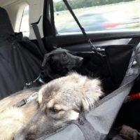 Bei der Autofahrt kann man entspannen.