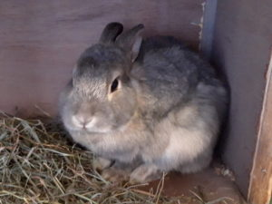 Kaninchen Amy FinchenIMG 20201003 162733533 HDR