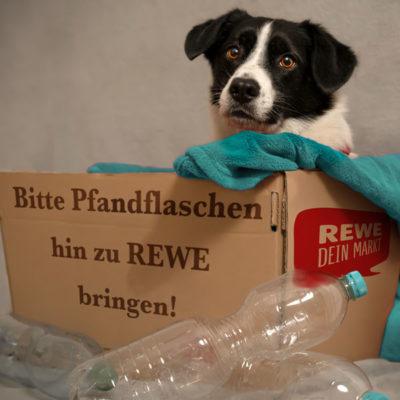 REWE Spendenaktion